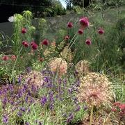 masa de vivaces en jardín privado