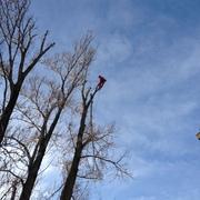 Empresas Trabajos Verticales - Arboricultura y Verticales Arbomad