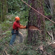 Empresas Jardineros - Arboricultura y Verticales Arbomad