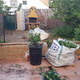Transformación de jardin