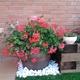 Detalle de jardinería,punto de luz, punto de flor.