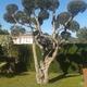 Empresas Jardineros - Jardín Plus