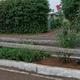 limpieza y poda de jardinera