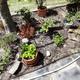 Maisha Jardinería