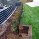 Plantación de arbustos