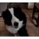 Dog-handshake-high-five_458521