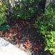 Plantación begonias