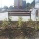 Instalación de riego por goteo y plantación de eleagnus
