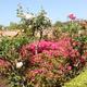 Jardin Culleredo