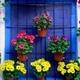 Macetas y flores para las ventanas.
