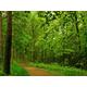 paisajes-de-bosques-030_452369