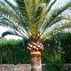 Mantenimiento Piscinas Y Jardines Mitad Del Mundo