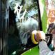 Renovación de ventana de automovil con graffiti. San Pedro.