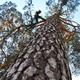 Empresas Ingenieros - Arboricultura y Verticales Arbomad