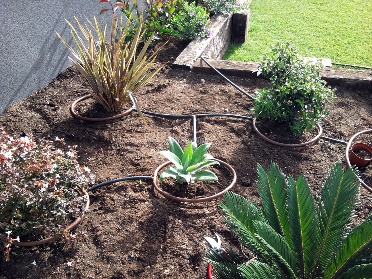 Foto jardineros mantenimiento jardines tala rboles de albanatura s l 58516 habitissimo - Jardineros tenerife ...