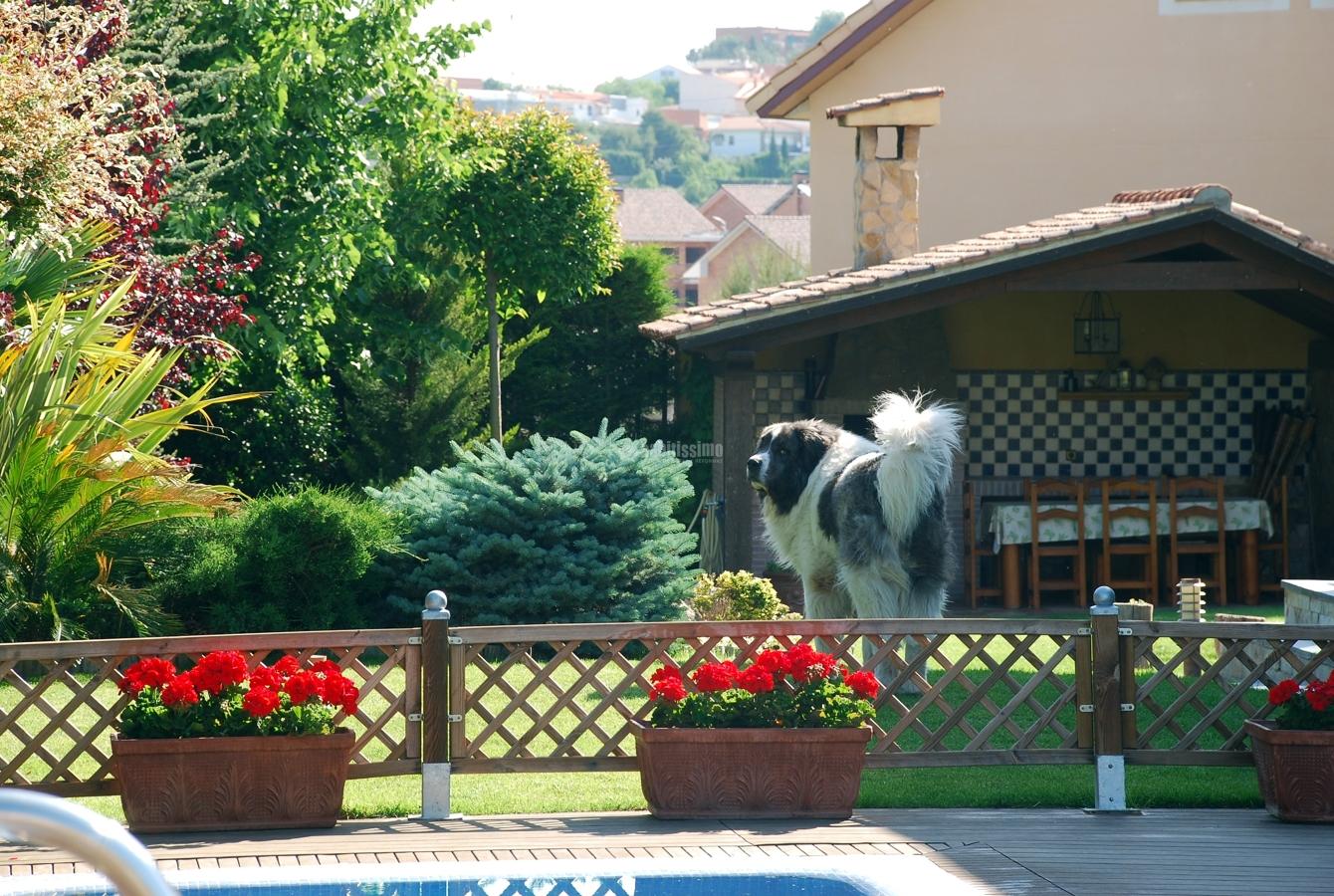 Foto mantenimiento de jardines de piscijardin s l 83260 for Mantenimiento de jardines