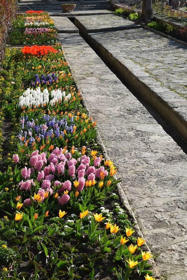 Plantar flores en primavera 2016/2017