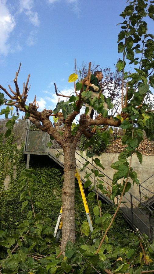 Quercus Jardiners