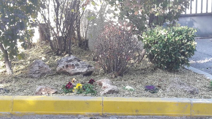 Foto colocacion de plantas de alberto l pez 1618821 for Jardines de alberto granada
