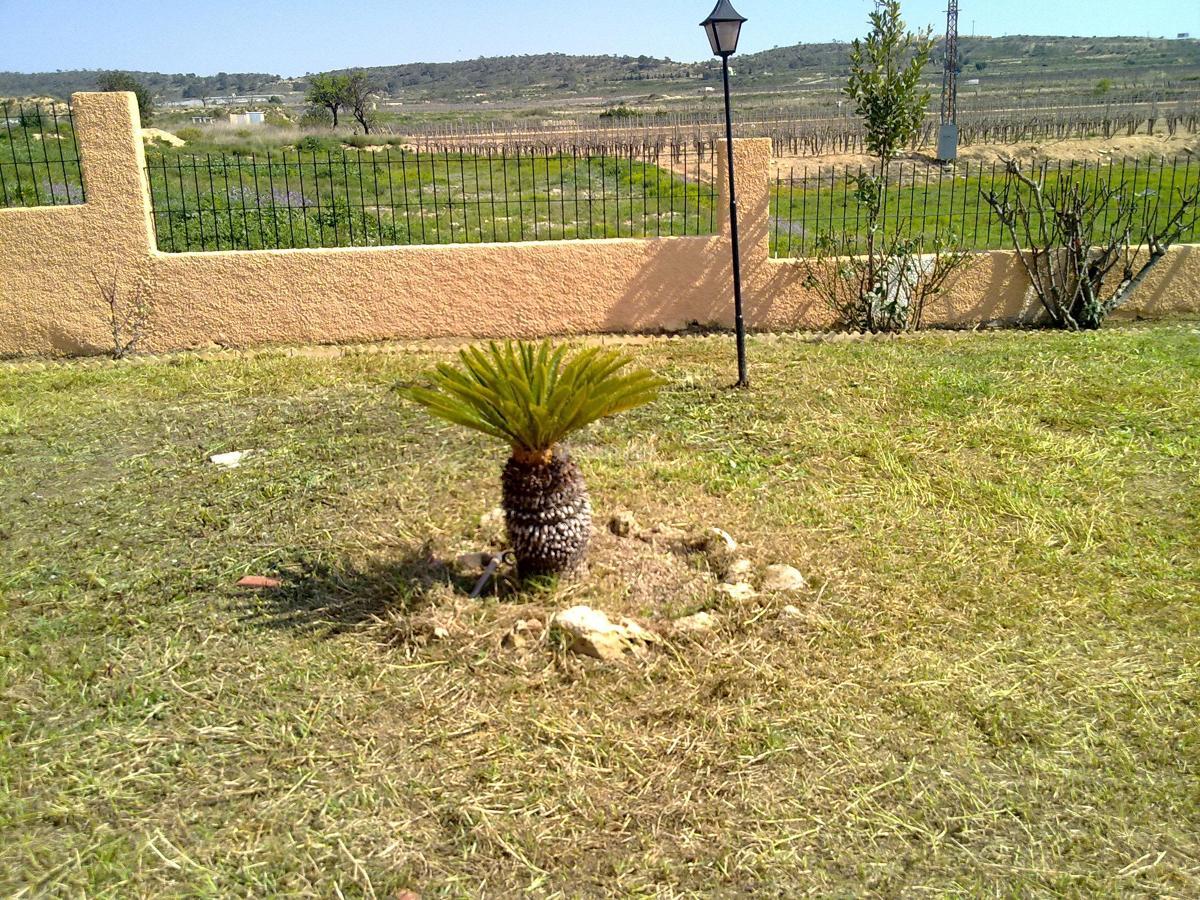Foto jardineros de ilexserrata 63981 habitissimo - Jardineros tenerife ...