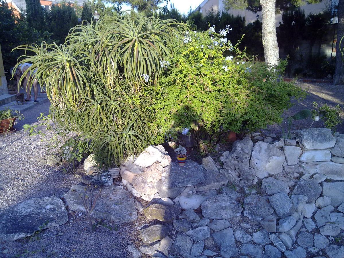 Foto jardineros de ilexserrata 63990 habitissimo - Jardineros tenerife ...