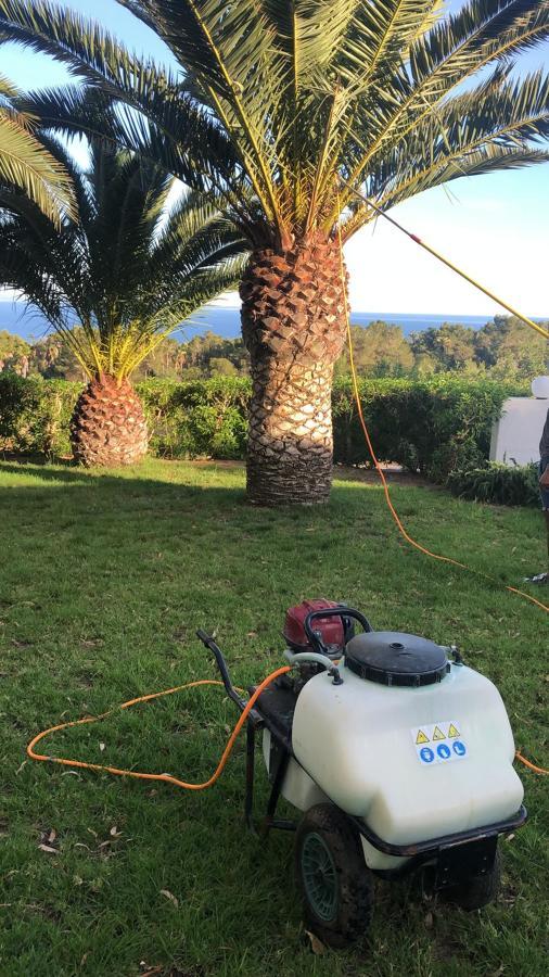 Fumigación de palmeras