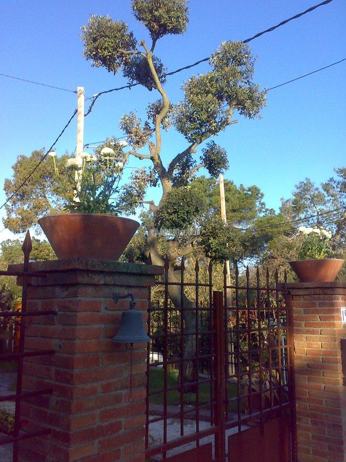 Jardineros, Jardín, Construcción Piscinas