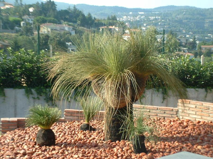 palmeras no comunes