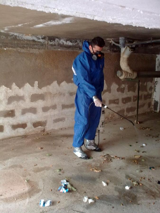 desinsectacion pulgas