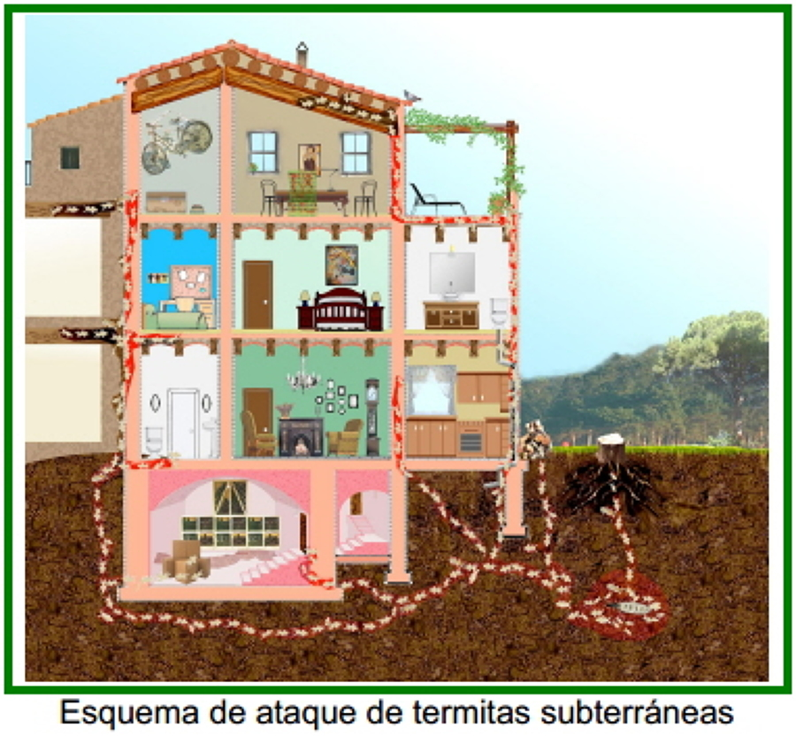 Termitero vivienda
