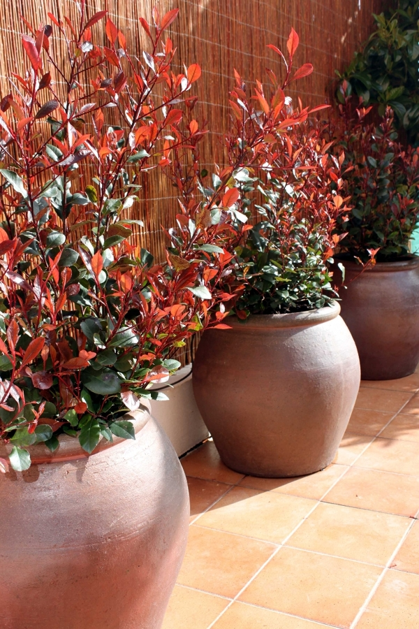Foto dise o de jard n en vivienda madrid de la for Diseno de jardines madrid