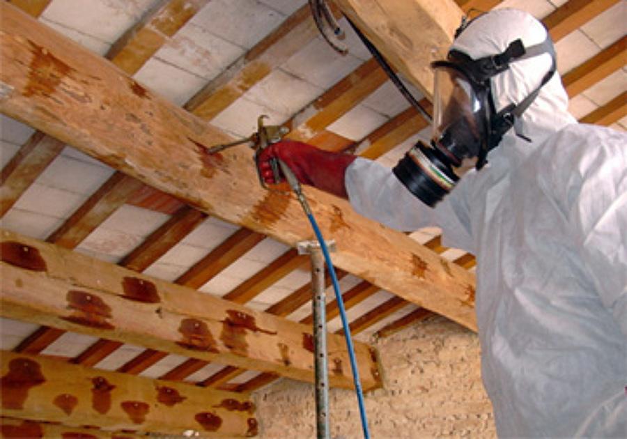 Foto tratamientos de madera termitas carcomas y hongos - Tratamiento de la madera ...