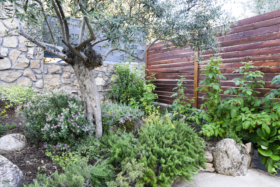 Parterre con aromáticas y olivo