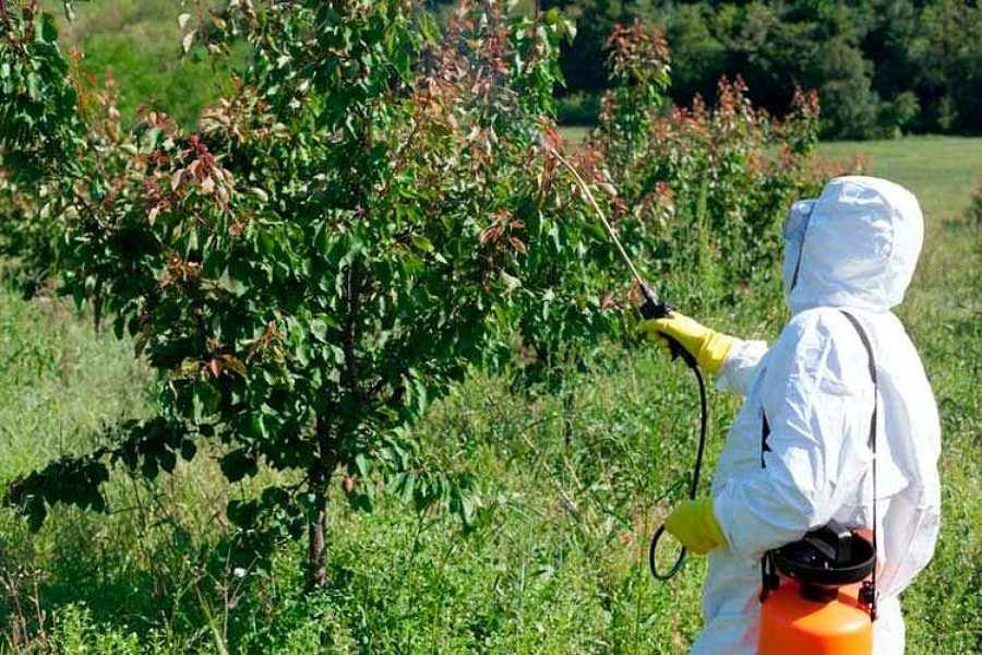 Trabajos fitosanitarios