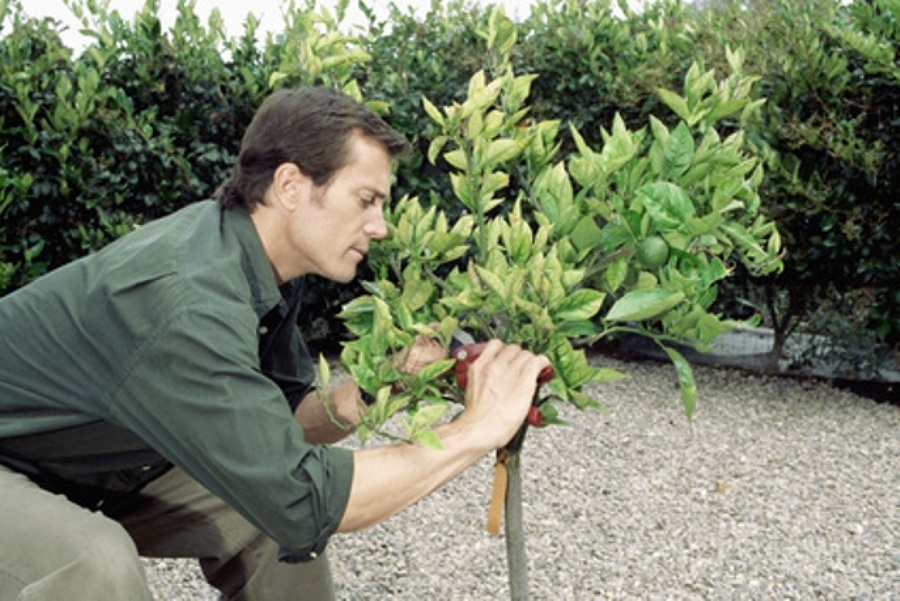 Mantenimiento profesional de jardines