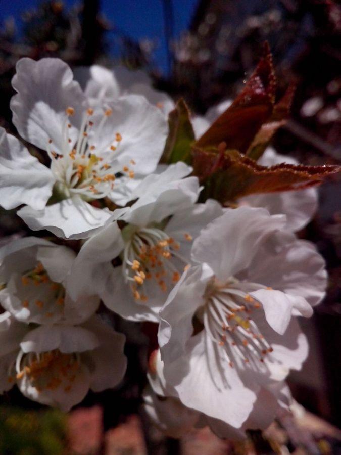 Foto almendros en flor de j l casas jardineria a for Jardineria a domicilio barcelona