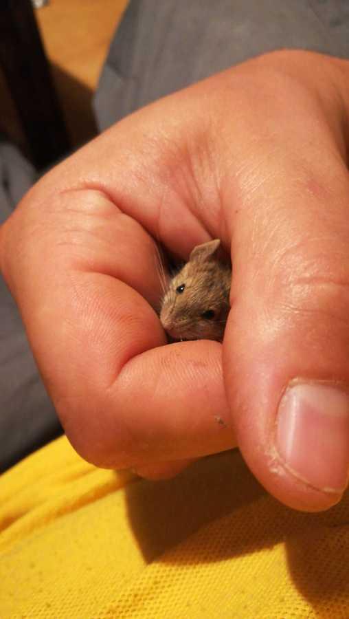 Tratamientos para el control de ratas y ratones
