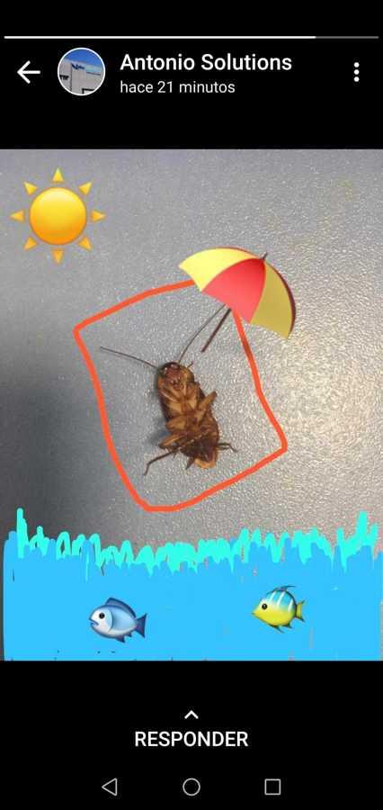 Cucaracha al sol