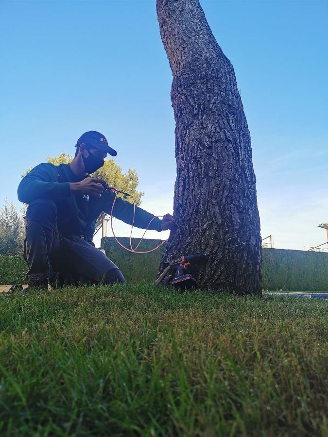 Endoterapia de pino