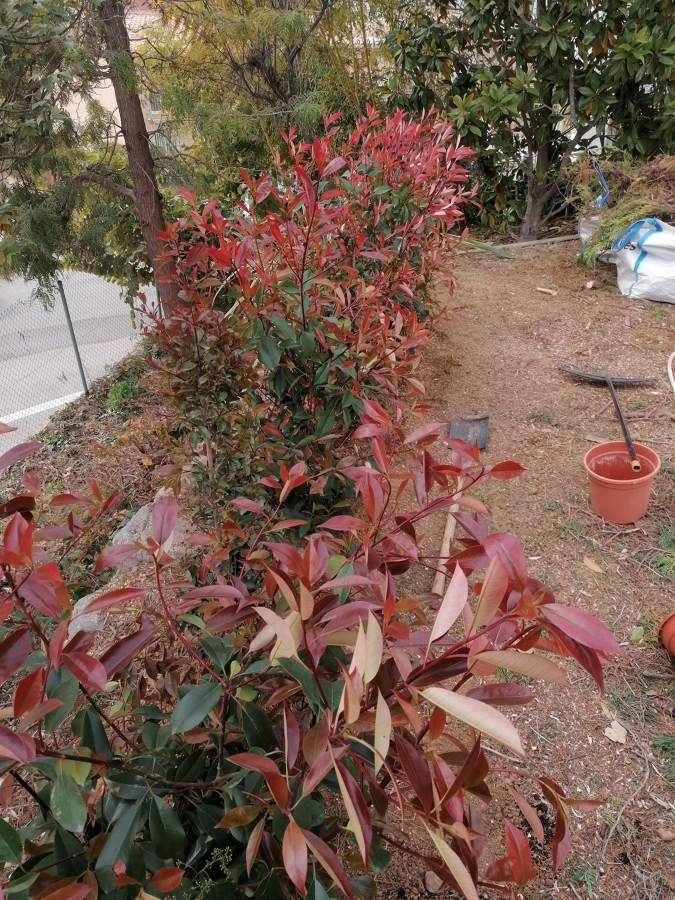 Puesta apunto jardín en Sitges