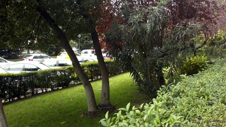 Jardín en Alcorcón