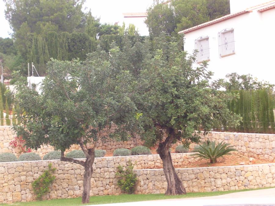Foto jardineras de piedra de muros jorge signes 705385 - Piedras para jardineras ...