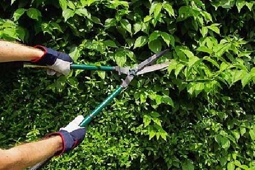 Foto jardineria de multiservicios universal 247712 for Auxiliar jardineria