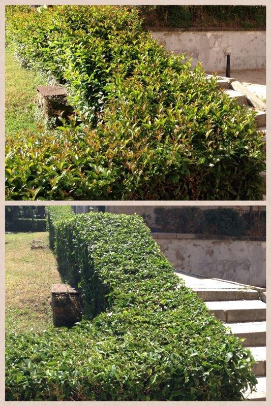 Foto jardineria de blueclean mantenimiento y servicios for Jardineria huelva