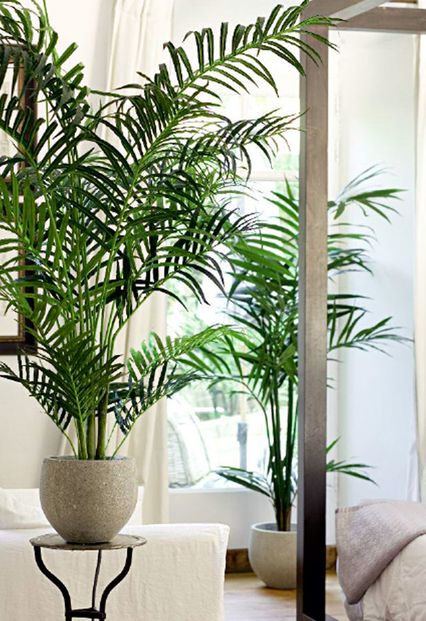 Foto kentias artificiales de plantas for Plantas artificiales para interiores