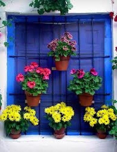 Foto Macetas y Flores para las Ventanas de Jardines Sherwood