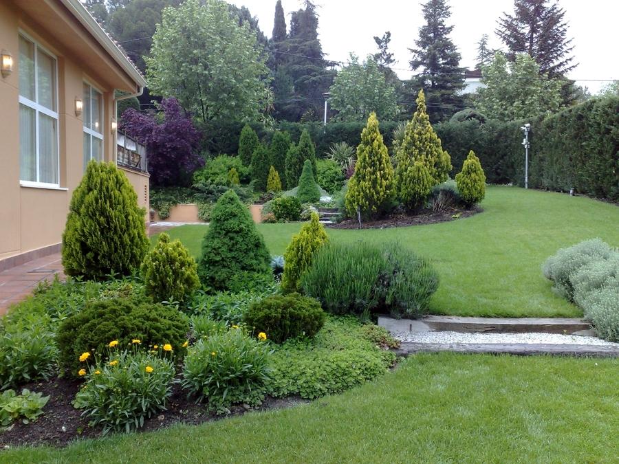 Foto macizos de coniferas de piscijardin s l 411961 for Tipos de pinos para jardin fotos