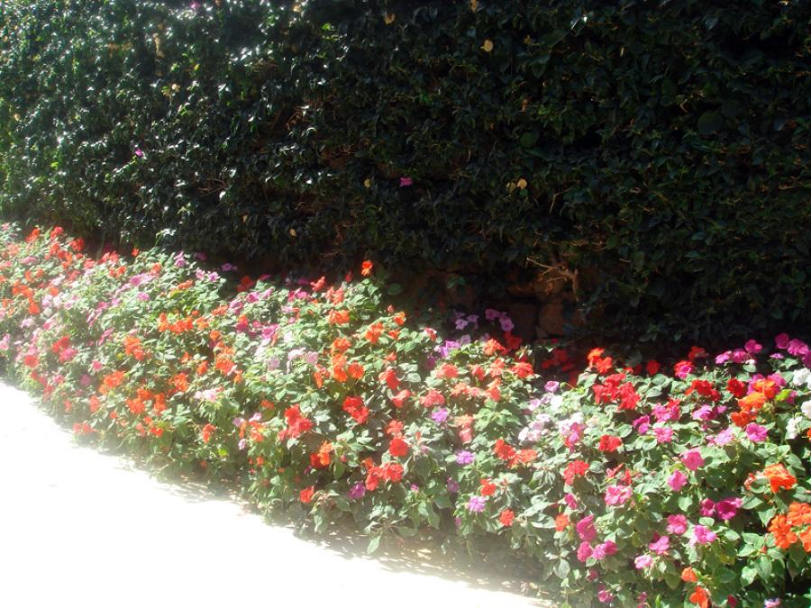 Nos gusta las flores aromaticas y jugar con colores