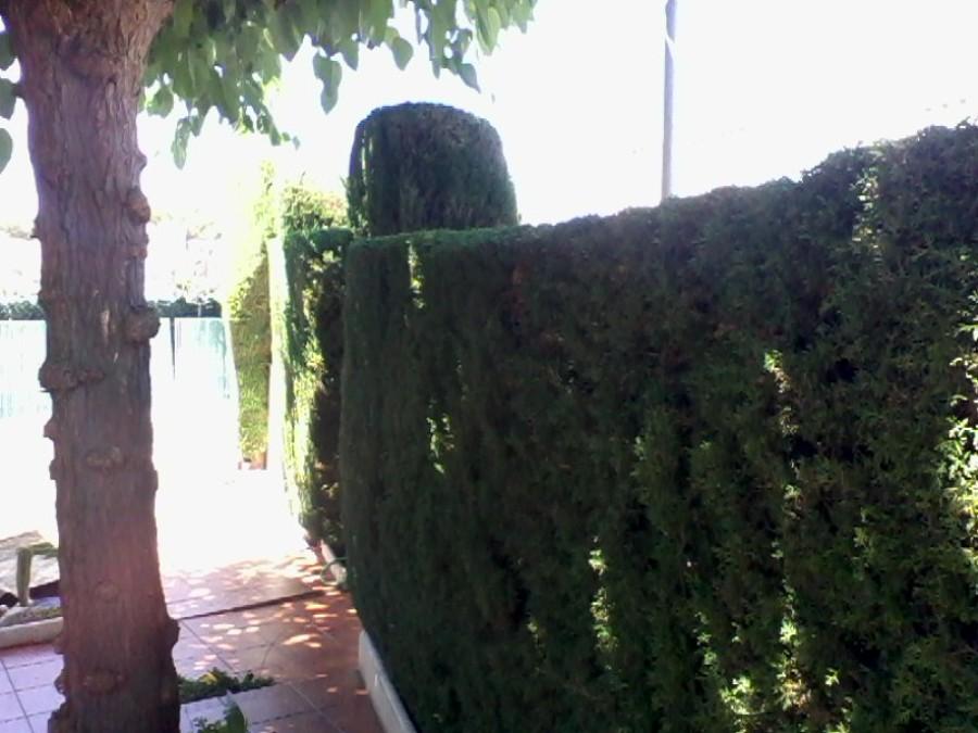 Foto podar arboles de j l casas jardineria a domicilio for Jardineria a domicilio barcelona