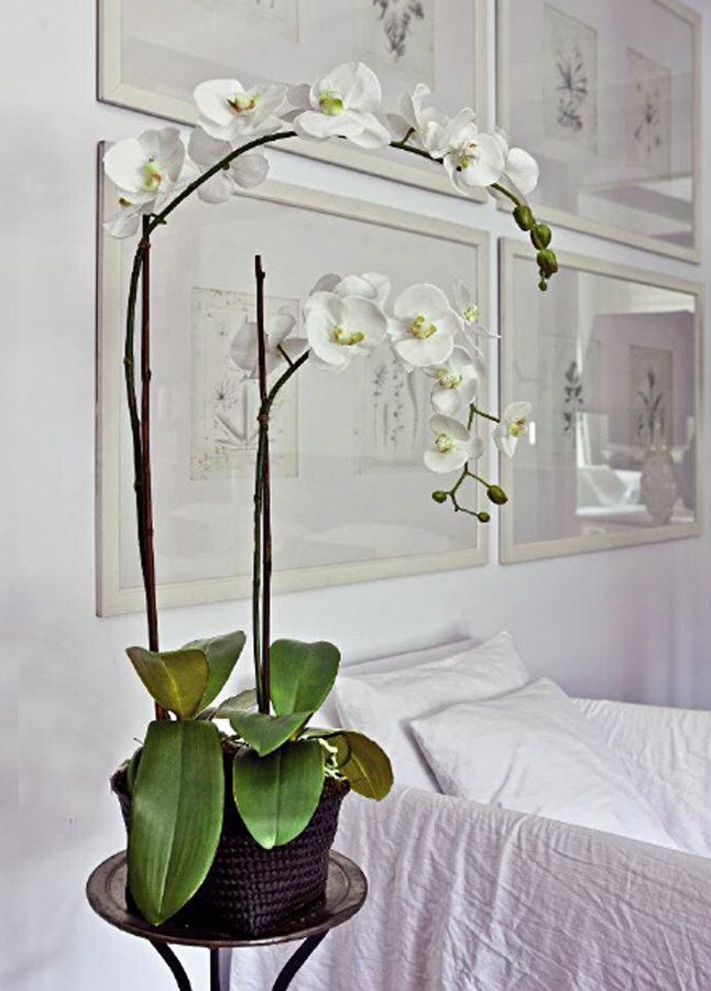 Foto orqu deas artificiales de plantas - Arbustos artificiales para decoracion ...